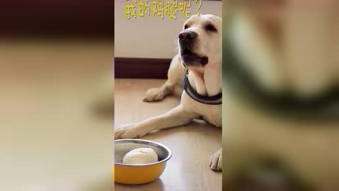 原来狗狗的嫉妒心也很强烈呀搞笑动物