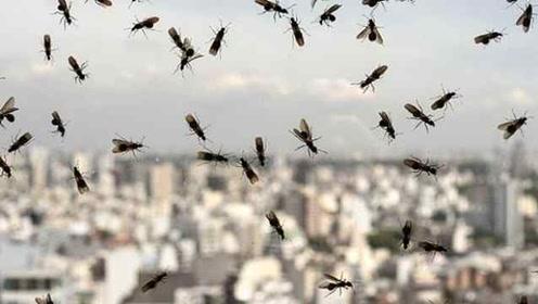 英國上空現巨型飛蟻群,太空可見,專家稱是繁殖行為不必恐慌