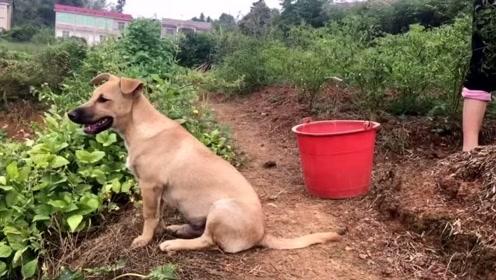 我妈说狗子每天不看家就光守着她