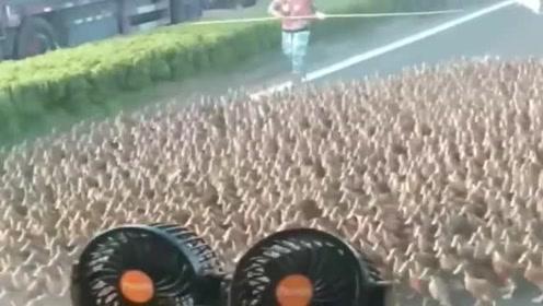 监控视频:两边车都耐心等待,没有按喇叭。