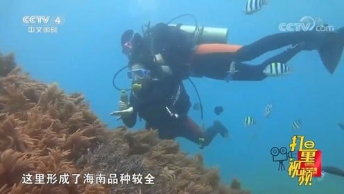 到海南体验海岛生活,潜水观察海底美景,释放青春活力