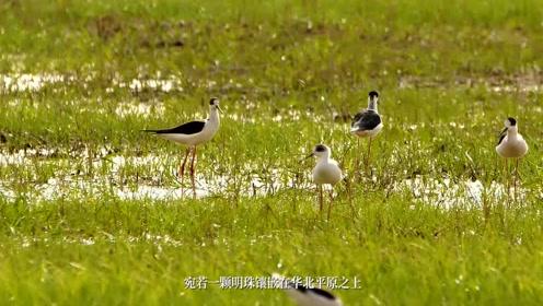 《生态美地 魅力滨湖》衡水市滨湖新区旅游发展宣传片