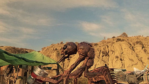 一只会喝啤酒的蚂蚁,而且还比摩托车跑的还快是种什么体验?