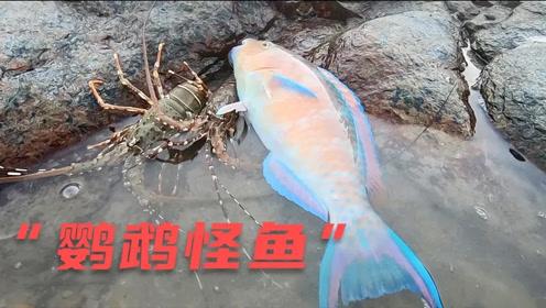 小伙赶海发现声音像鹦鹉的怪鱼,浑身五颜六色,连大龙虾都比不了