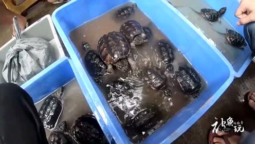 在乌龟市场,老板的再三叮嘱小心一点,结果话还没完就被咬了一口