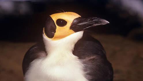 世界上最专情的鸟类 实行终身配偶制