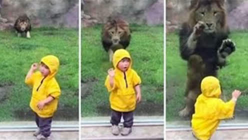 萌娃和动物搞笑合集:动物园里的猛兽和萌娃