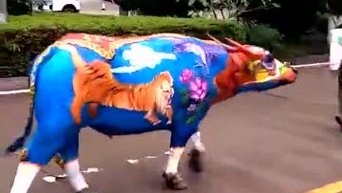 街拍五彩神牛