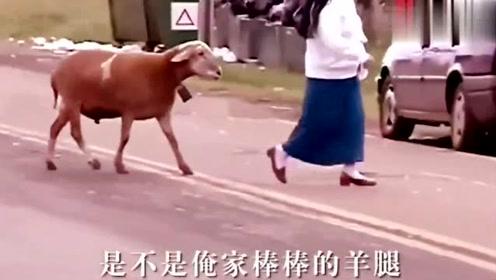 方言配音动物搞笑视频 肚子的笑疼了 不笑你打我