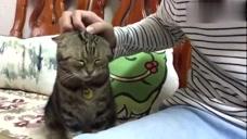 喵星人求主人抱抱,小心翼翼的样子好可爱哦,猫咪:快盘我!