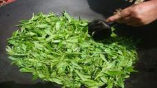 20元一斤的茶叶和2000元一斤的茶叶,有什么区别?今天算长见识了