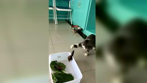 搞笑动物:猫咪第一次见蜗牛,成了怂包