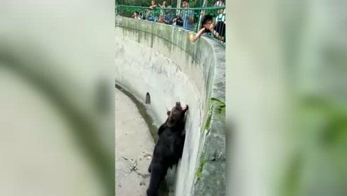 小孩在动物园逗熊玩,没想到熊做了这个动作,