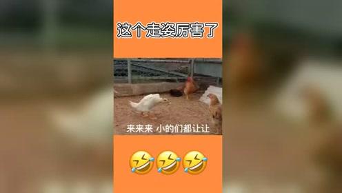 搞笑动物视频,这个鸡的走路动作厉害了,像极
