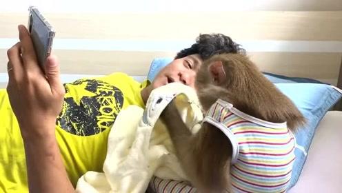 小猴子跟妈妈视频,聪明的猴子做各种耍萌搞怪的动作逗妈妈开心