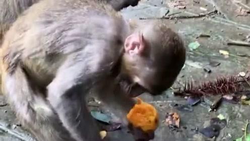 小猴子被蚊子叮了之后的样子,像极了我被蚊子