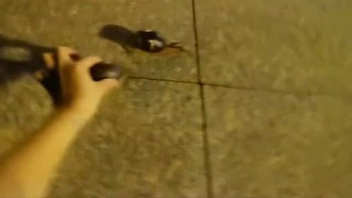两蜗牛约好晚上相亲,但爬这么慢等到了都第二
