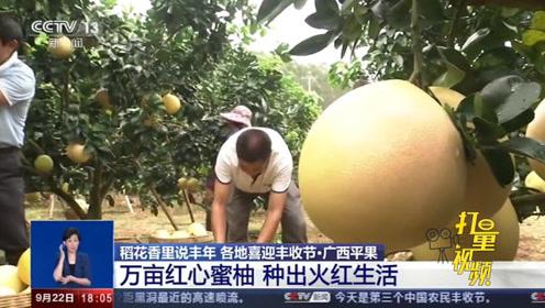 广西平果:万亩红心蜜柚助脱贫,村民过上红火生活