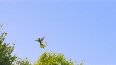 智能仿生扑翼飞行器,Go Go *ird1000系列新品发布宣传视频