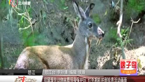 邯郸最大的野生动物园开园 100余种稀有珍贵野生动物