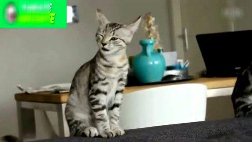 动物宠物傻缺蠢萌搞笑视频集锦