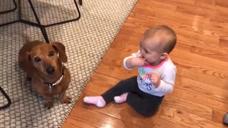 这狗狗还真是长了一颗童心啊!居然和小baby撒起