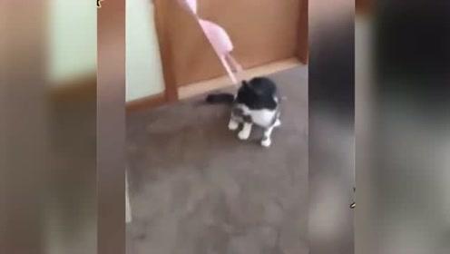 动物搞笑配音:这配音太有才了,我看到第二个