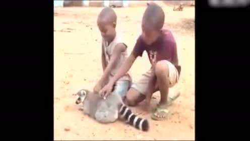 玉山搞笑动物