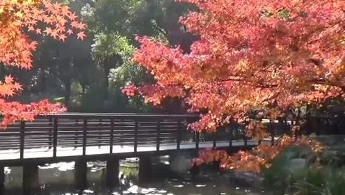 唯美视听的,休闲轻音乐《秋色》