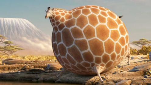 一部减肥动画短片,动物们像球一样膨胀,行动