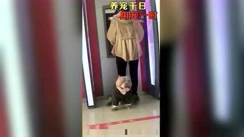 搞笑动物开心