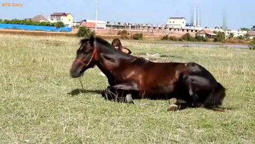 美女带马儿去吃嫩草,马儿地上撒娇打滚,可爱极了
