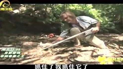 小伙为了采集矛头蝮蛇的毒液,而不惜面对被攻击的危险!
