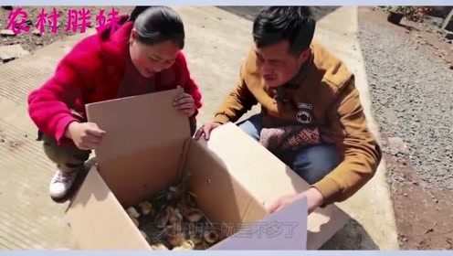 大洋花重金送胖妹100个礼物,胖妹收到惊喜万分,赶紧给老公做好吃的