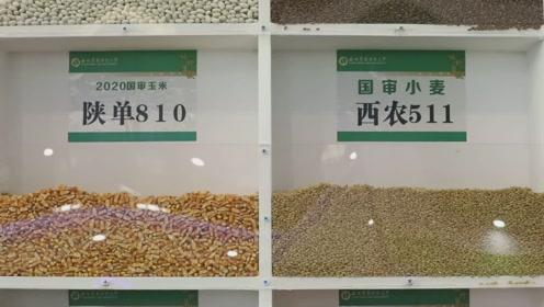 """(电视通稿·国内·社会)杨凌农高会:""""粮食安全""""成热点"""