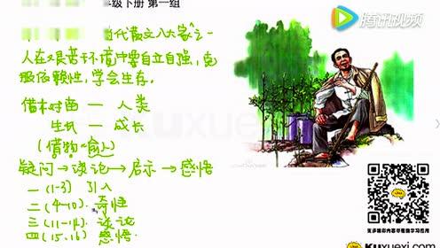 六年级语文下册3 桃花心木(林清玄)