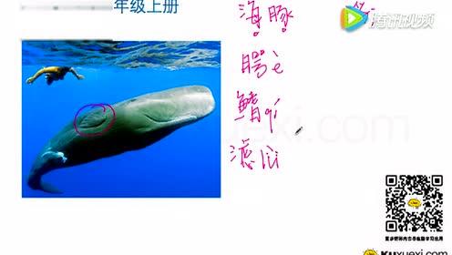五年级语文上册9 鲸_flash多媒体课件
