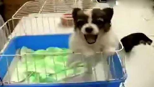 阿伟 阿伟?那个叫阿伟的顾客 您的狗在找你