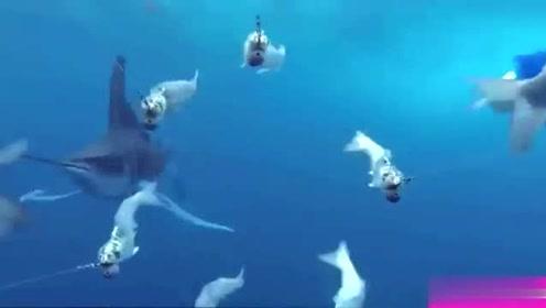 为什么深海动物长得可爱?