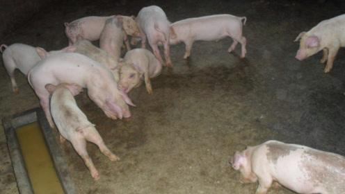 小伙回农村建养猪场,居然被没收了,是什么原因?