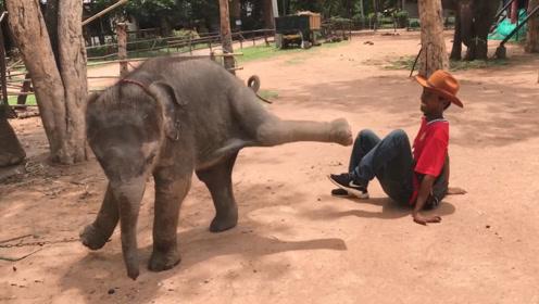 饲养员和小象打架,瞧把小象气的,镜头拍下搞