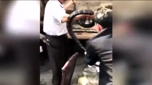 搞笑-实拍广东男子将两米长过山风活蛇泡酒