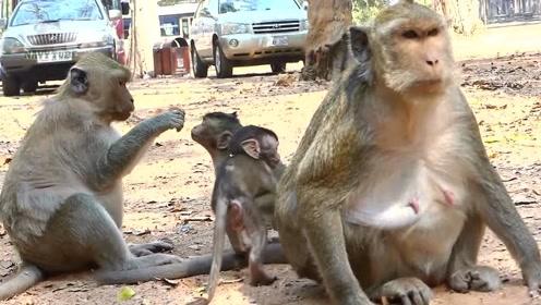 游客和猴子近距离玩耍,小猴子接下来的举动让游客笑趴了