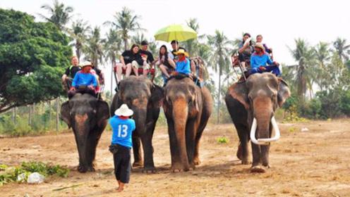 去到泰国旅游,为什么说不要骑大象?今天算长见识了