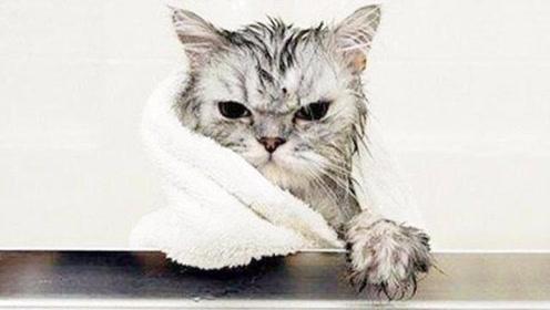 搞笑动物:小公猫偷看母猫洗澡,不料正好被发