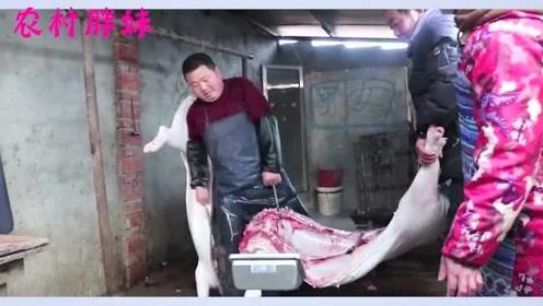 胖妹家真土豪,越是肉不便宜越要买一头猪,一斤25元,一共一万多