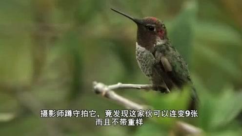 """摄影师蹲守67天,拍到了一只会""""变脸""""的鸟,连变9次不重样"""