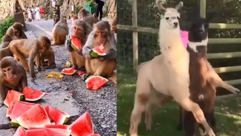 搞笑有趣的动物世界~动物沙雕行为欢乐多~逗您一