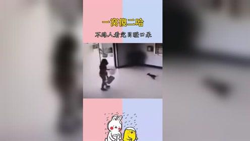 搞笑视频:一波傻二哈请求出战,路人看得目瞪口呆!