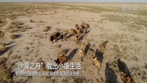 """""""沙漠之舟""""载出小康生活"""